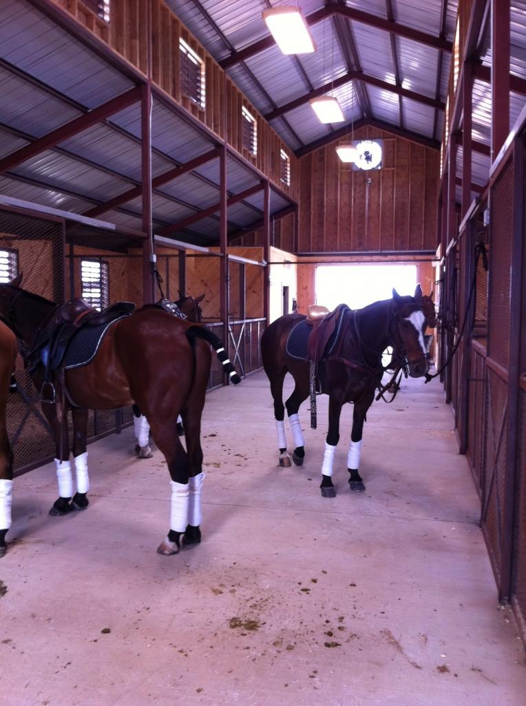 505 horses