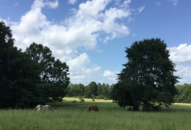 How Three Generations Of A Horse Loving Family Came To