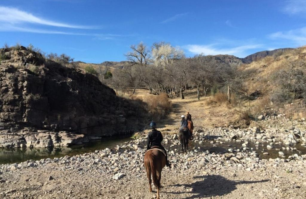Cibolo Creek horses