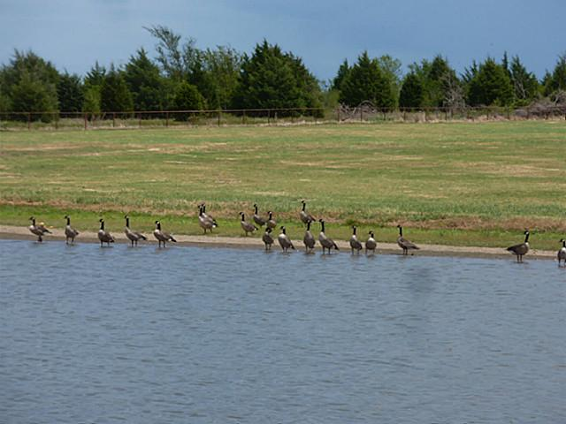 Home to Canadian geese